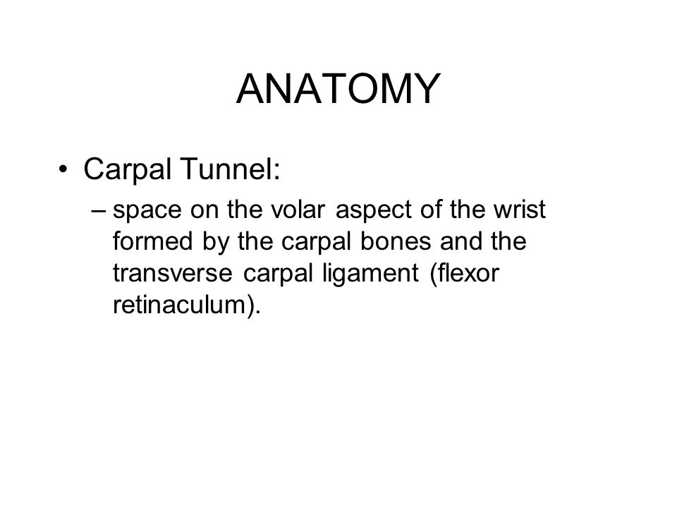 ANATOMY Carpal Tunnel: