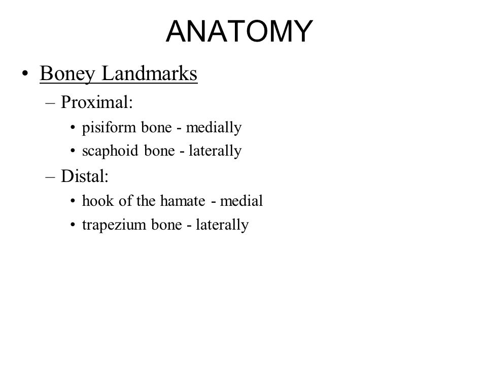ANATOMY Boney Landmarks Proximal: Distal: pisiform bone - medially