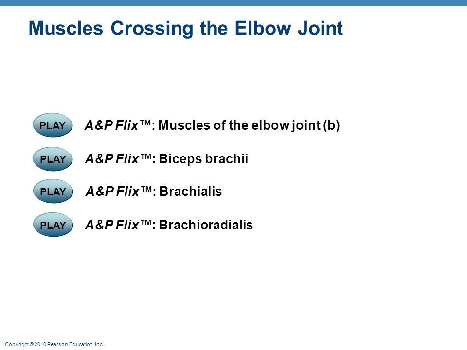 Muscles Crossing the Elbow Joint