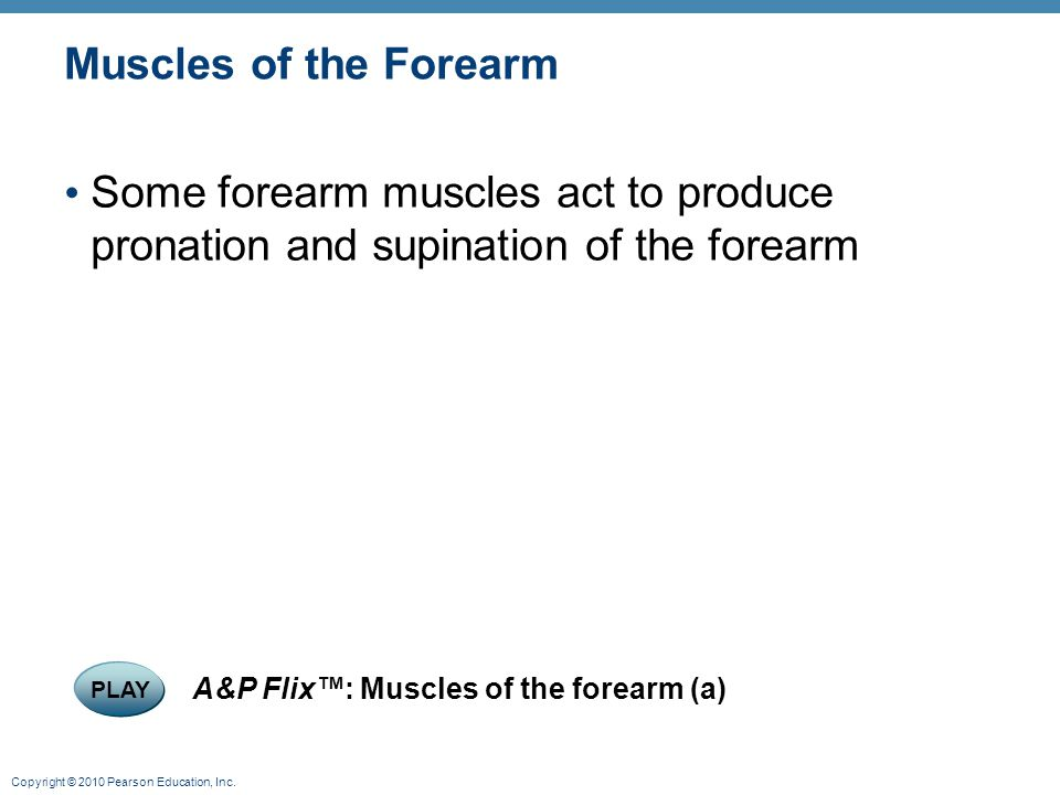 Muscles of the Forearm Some forearm muscles act to produce pronation and supination of the forearm.