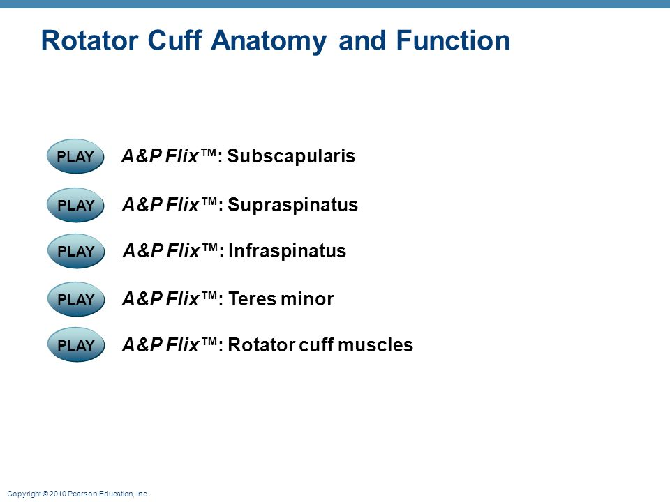 Rotator Cuff Anatomy and Function