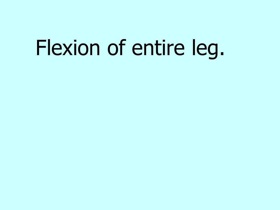 Flexion of entire leg.