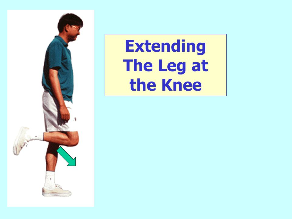Extending The Leg at the Knee