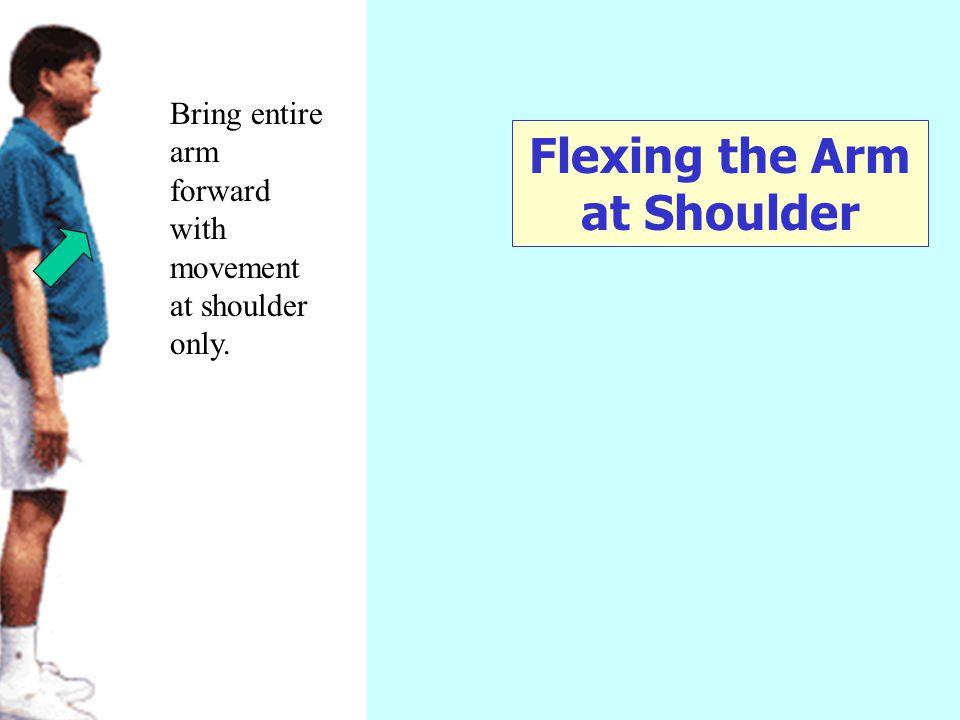 Flexing the Arm at Shoulder