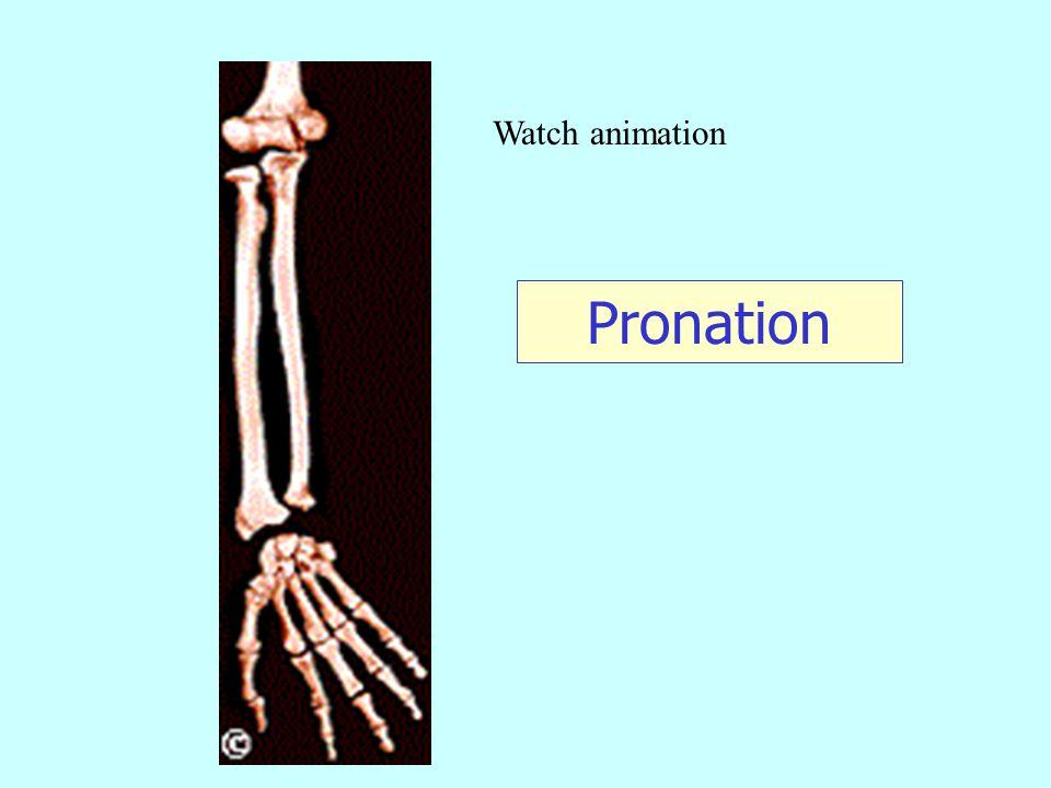 Watch animation Pronation