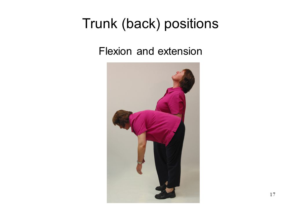 Trunk (back) positions Flexion and extension