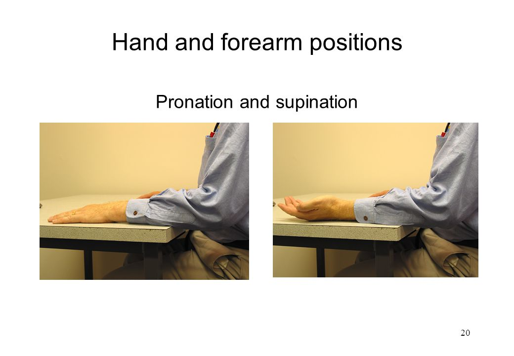Hand and forearm positions Pronation and supination