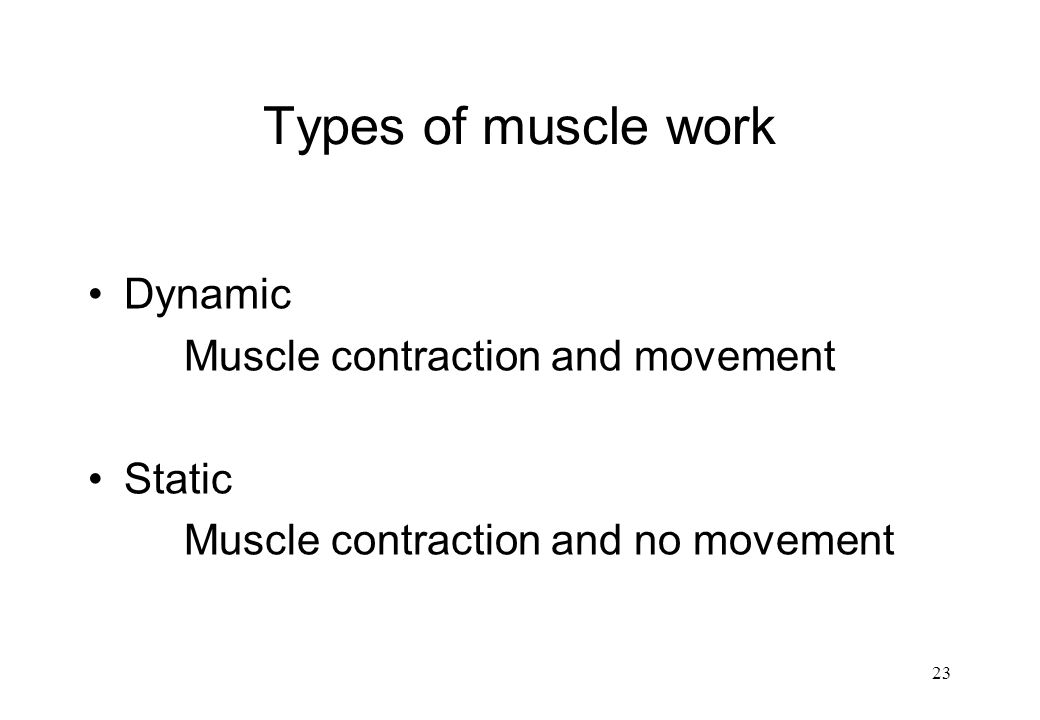 Types of muscle work Dynamic Muscle contraction and movement Static