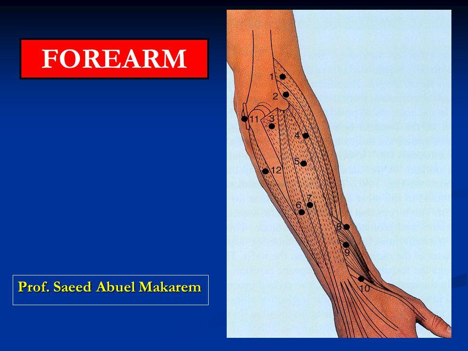 Prof. Saeed Abuel Makarem