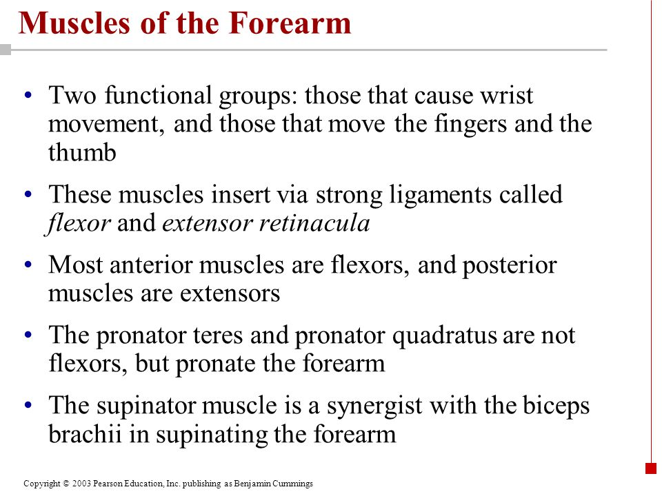 Muscles of the Forearm Two functional groups: those that cause wrist movement, and those that move the fingers and the thumb.