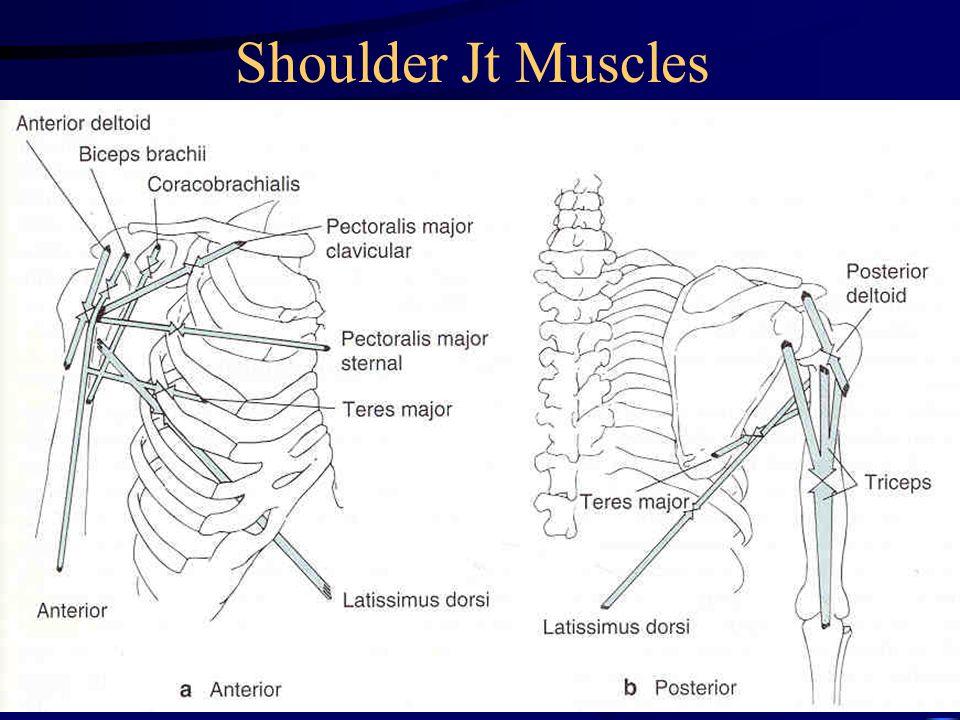Shoulder Jt Muscles