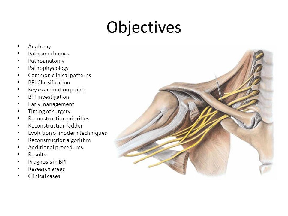 Objectives Anatomy Pathomechanics Pathoanatomy Pathophysiology