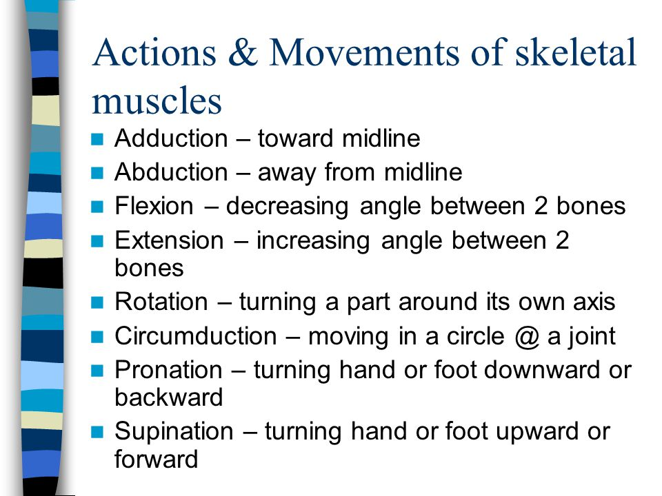 Actions & Movements of skeletal muscles