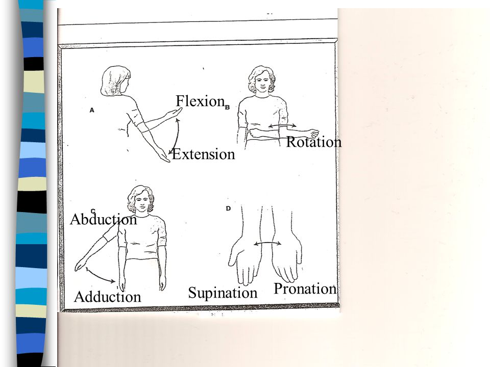 Flexion Rotation Extension Abduction Pronation Supination Adduction