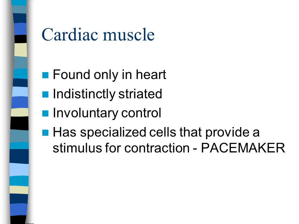 Cardiac muscle Found only in heart Indistinctly striated