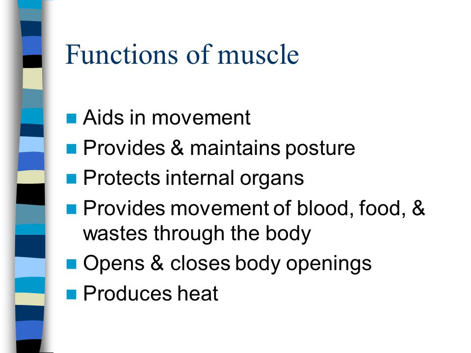 Functions of muscle Aids in movement Provides & maintains posture