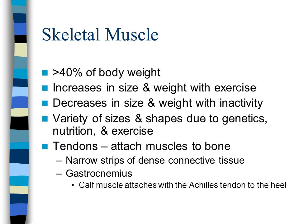 Skeletal Muscle >40% of body weight