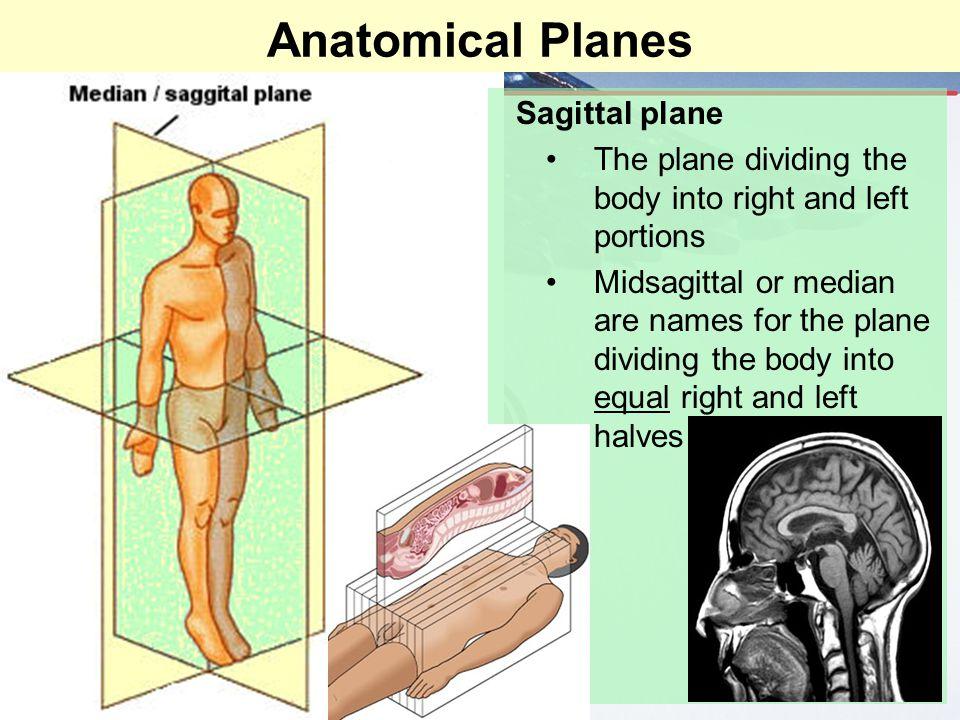 Anatomical Planes Sagittal plane