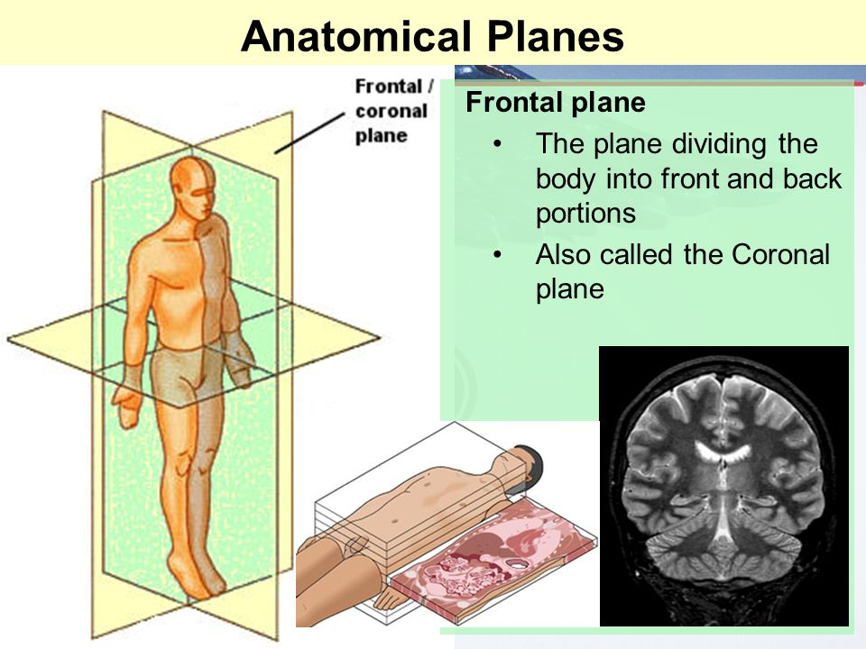Anatomical Planes Frontal plane