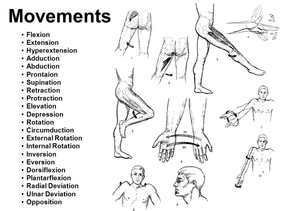 Movements Flexion Extension Hyperextension Adduction Abduction