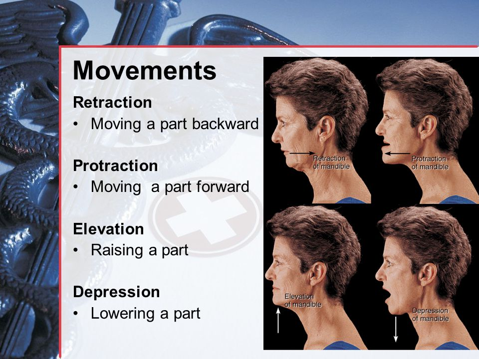 Movements Retraction Moving a part backward Protraction
