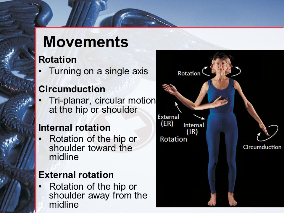 Movements Rotation Turning on a single axis Circumduction