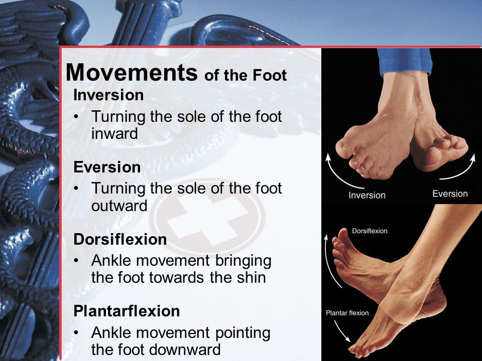 Movements of the Foot Inversion Turning the sole of the foot inward