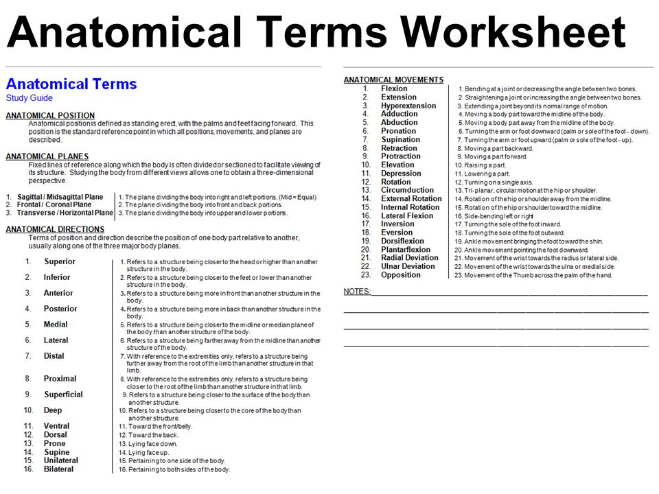 Anatomical Terms Worksheet