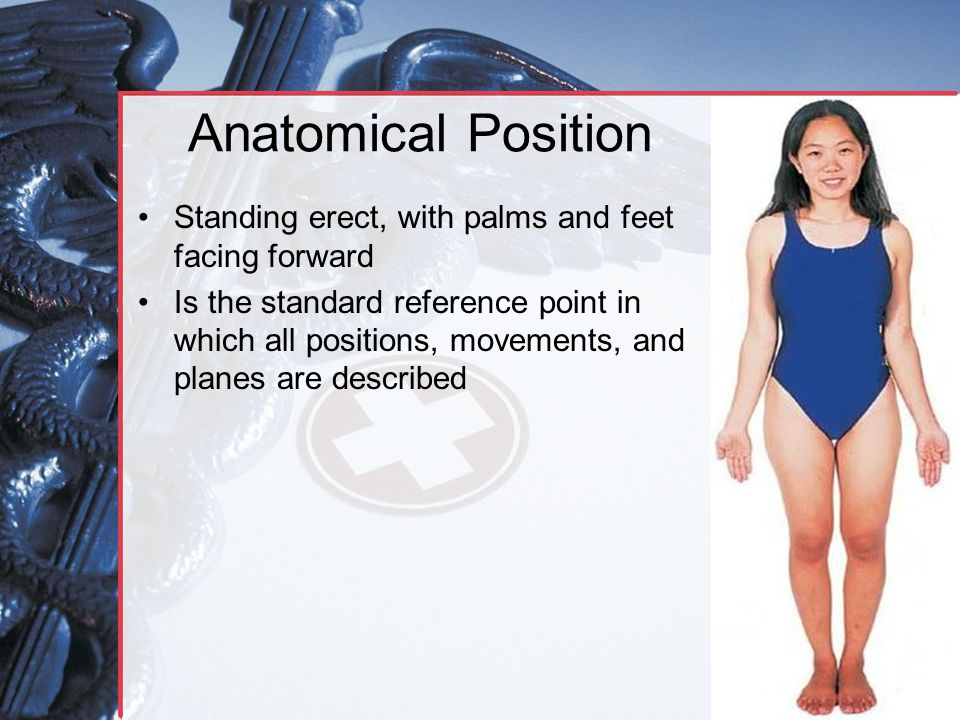 Anatomical Position Standing erect, with palms and feet facing forward