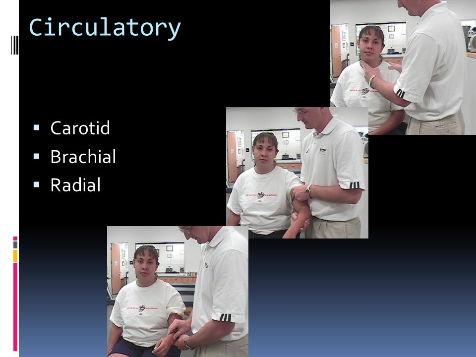 Circulatory Carotid Brachial Radial