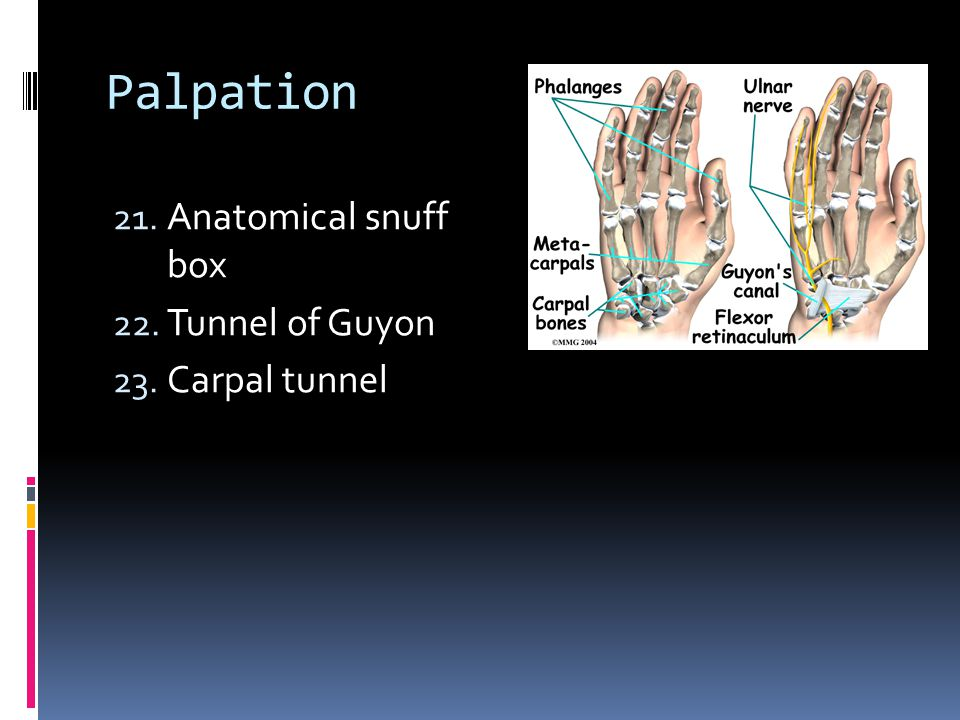 Palpation Anatomical snuff box Tunnel of Guyon Carpal tunnel
