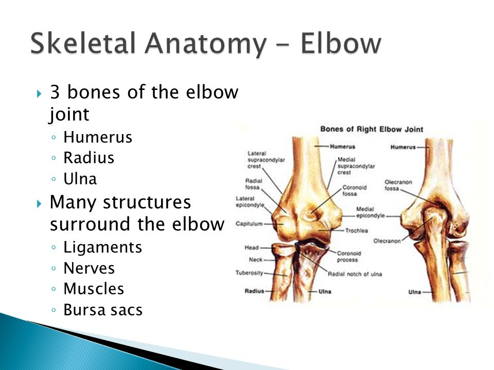 The Elbow Wrist And Hand Ppt Video Online Download