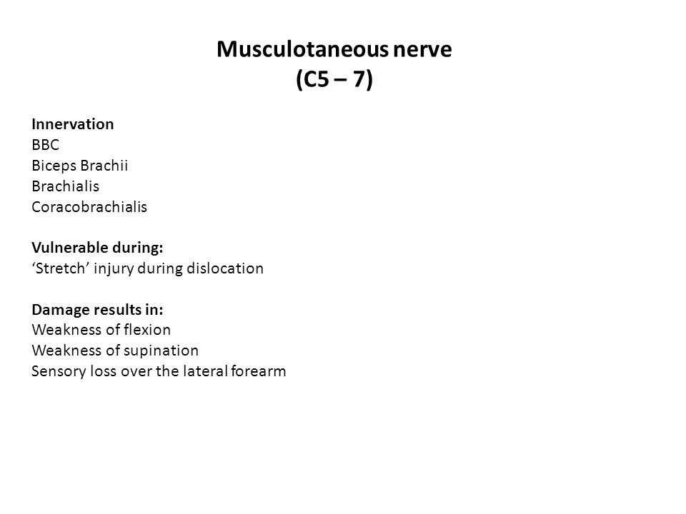 Musculotaneous nerve (C5 – 7)
