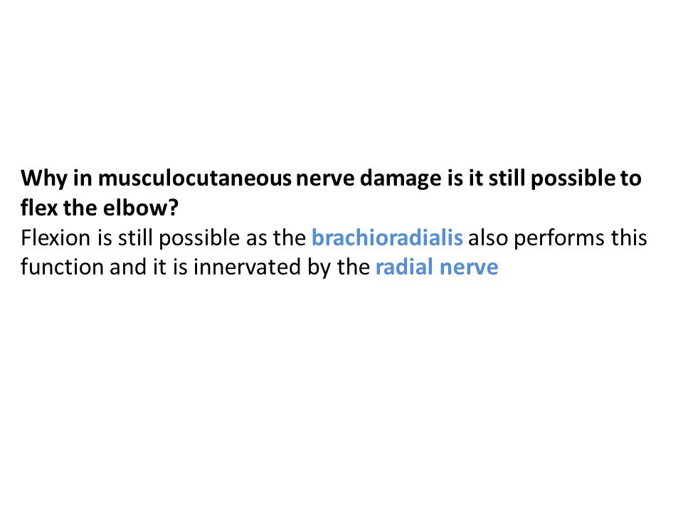 Why in musculocutaneous nerve damage is it still possible to flex the elbow