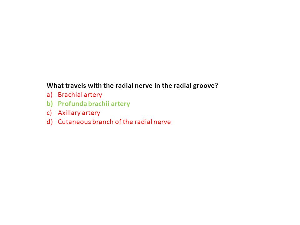 What travels with the radial nerve in the radial groove