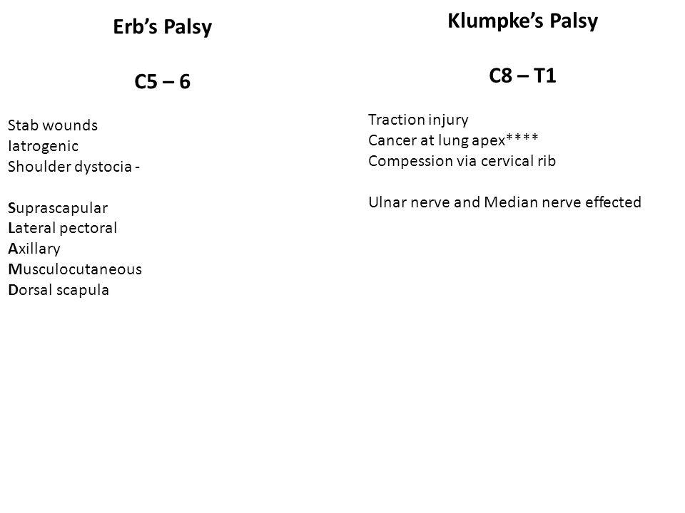 Klumpke's Palsy C8 – T1 Erb's Palsy C5 – 6