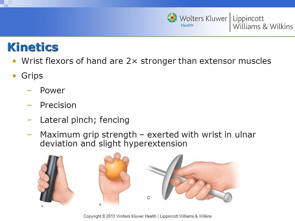 Kinetics Wrist flexors of hand are 2× stronger than extensor muscles