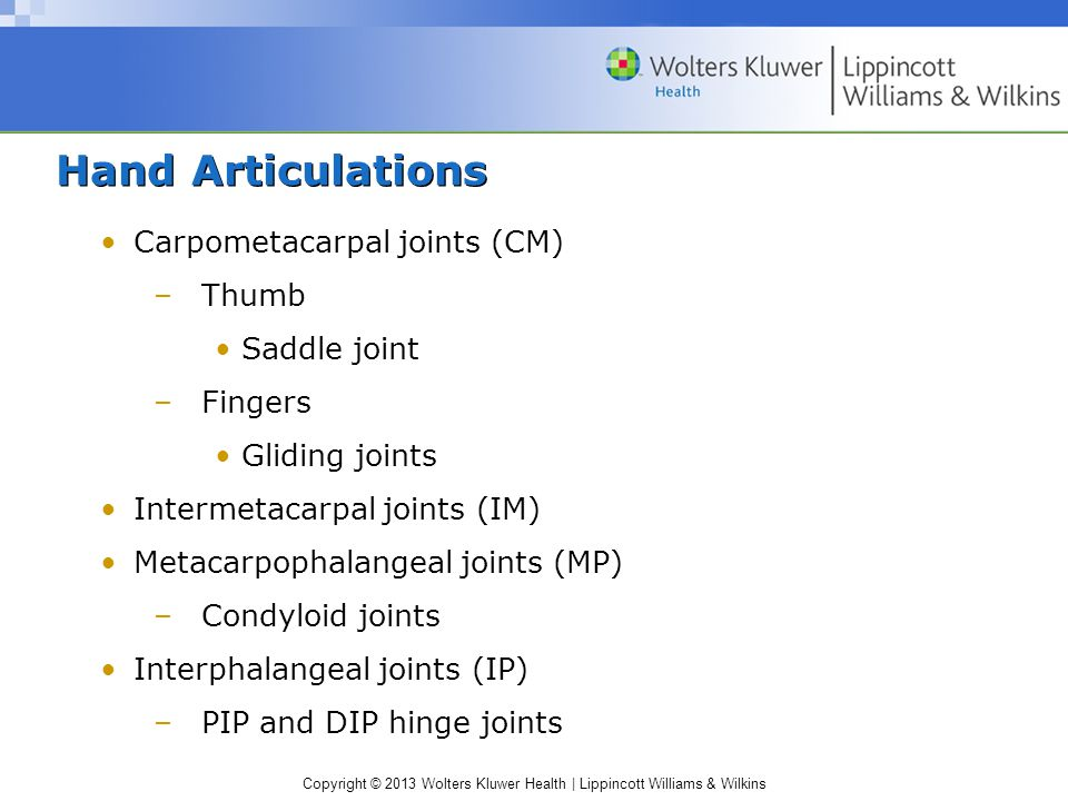 Hand Articulations Carpometacarpal joints (CM) Thumb Saddle joint