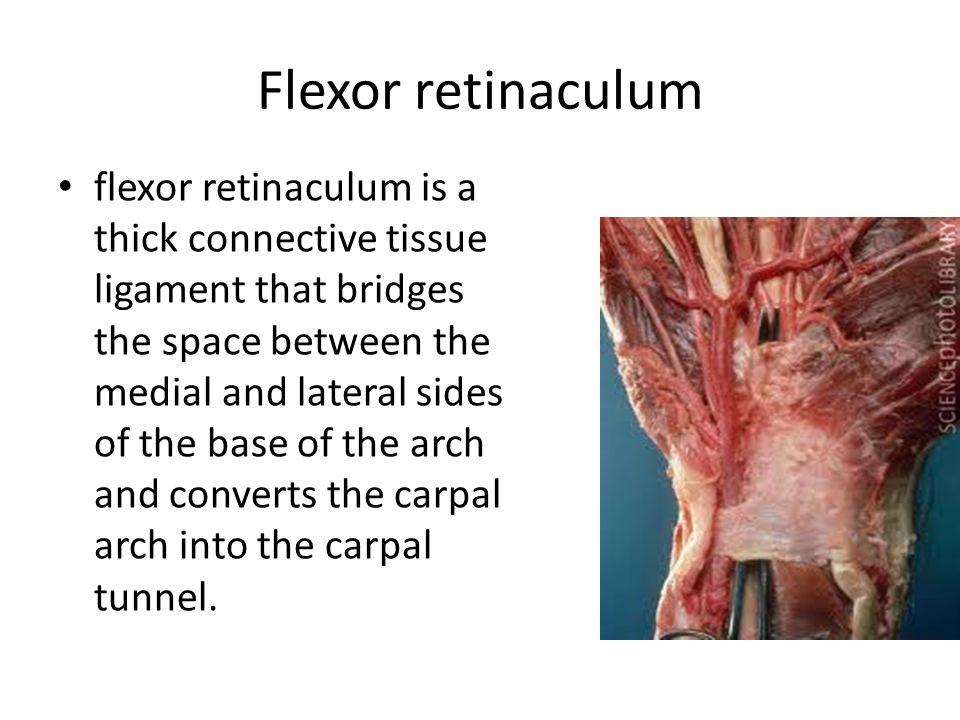 Flexor retinaculum