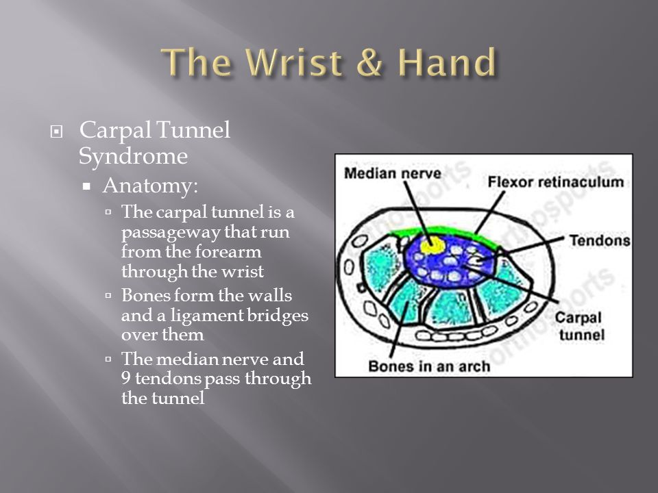 The Wrist & Hand Carpal Tunnel Syndrome Anatomy: