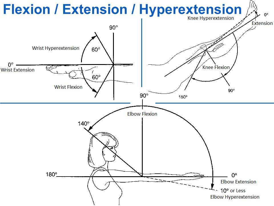 Flexion definition anatomy
