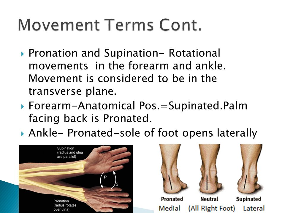 Movement Terms Cont.