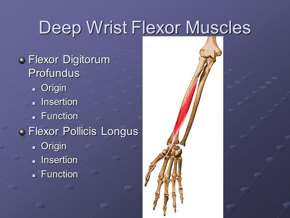 Deep Wrist Flexor Muscles