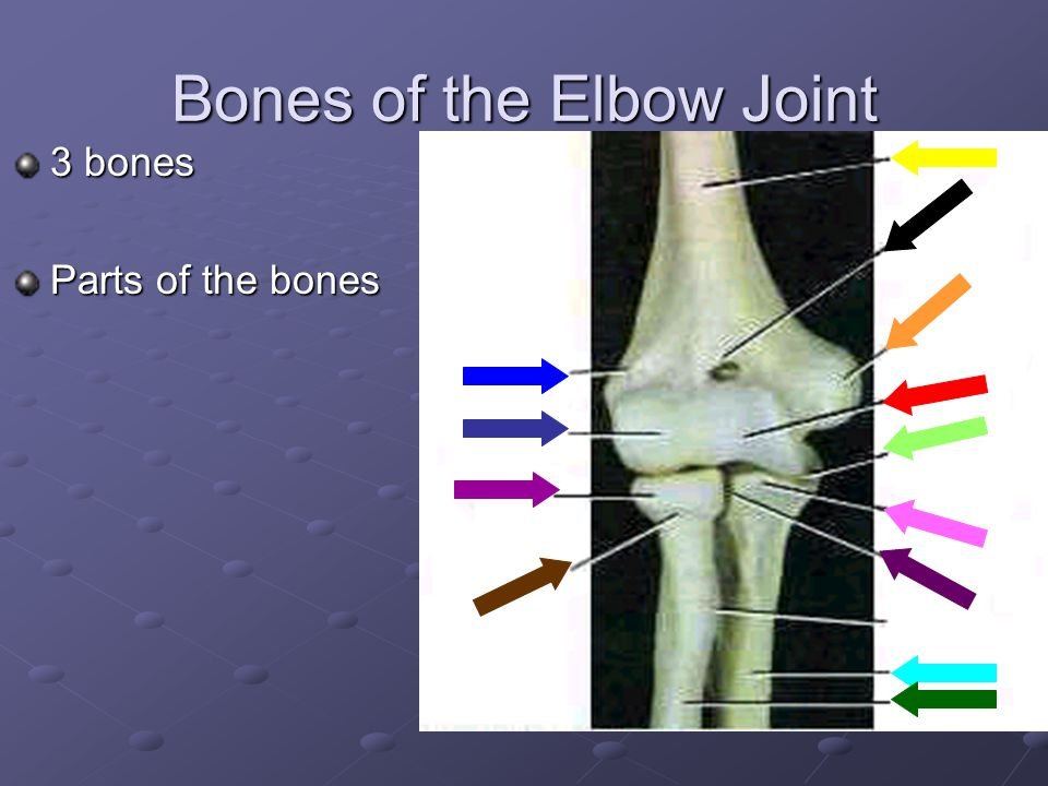 Bones of the Elbow Joint