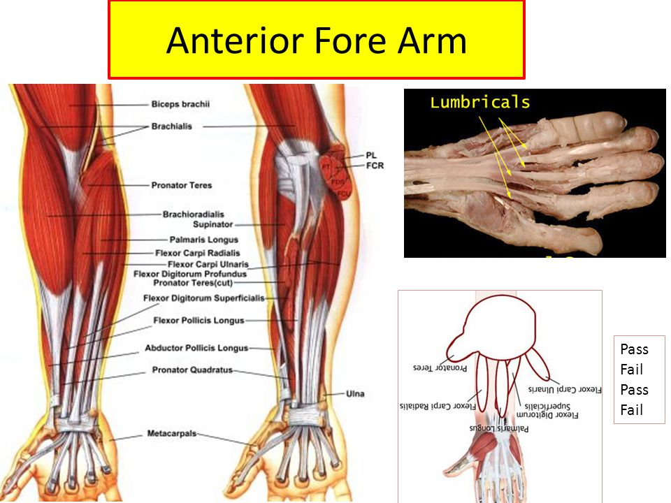 Anterior Fore Arm Pass Fail