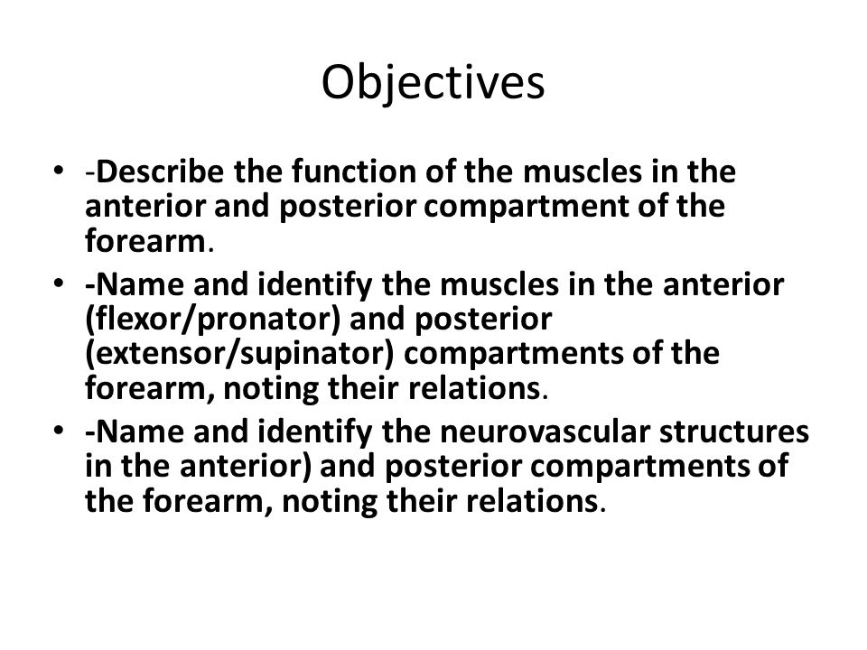 Objectives -Describe the function of the muscles in the anterior and posterior compartment of the forearm.