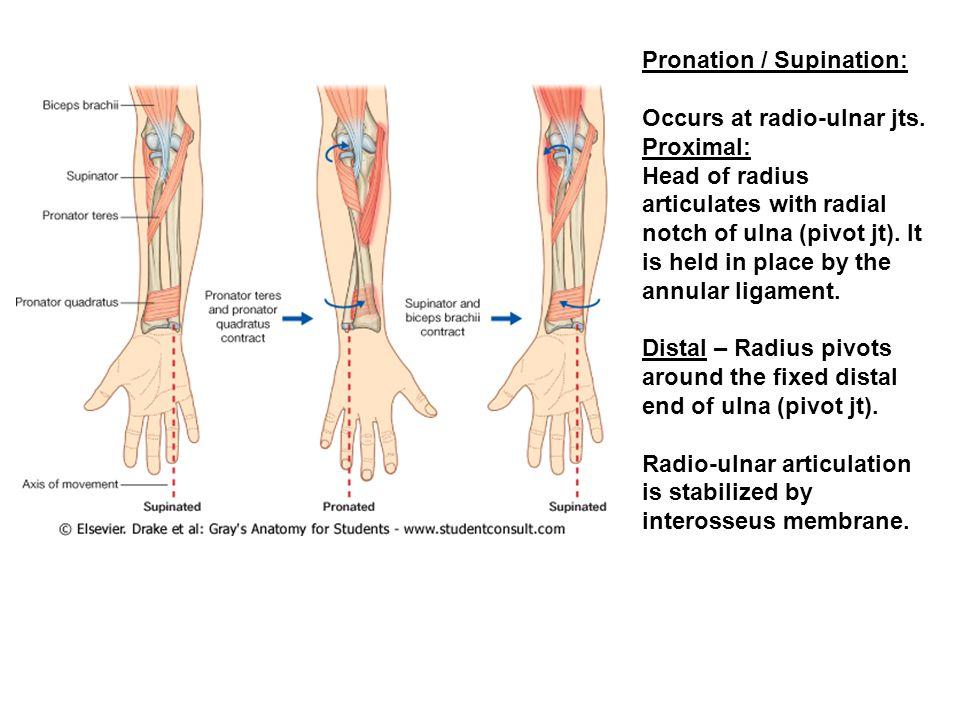 Pronation / Supination: