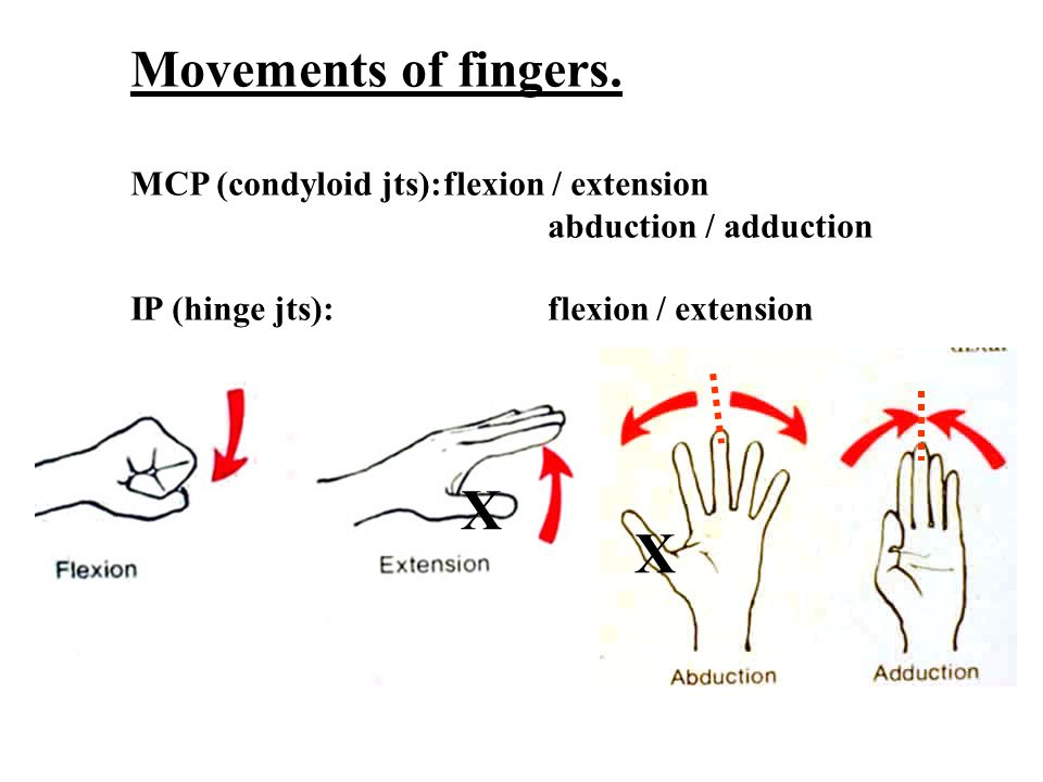 X X Movements of fingers. MCP (condyloid jts): flexion / extension