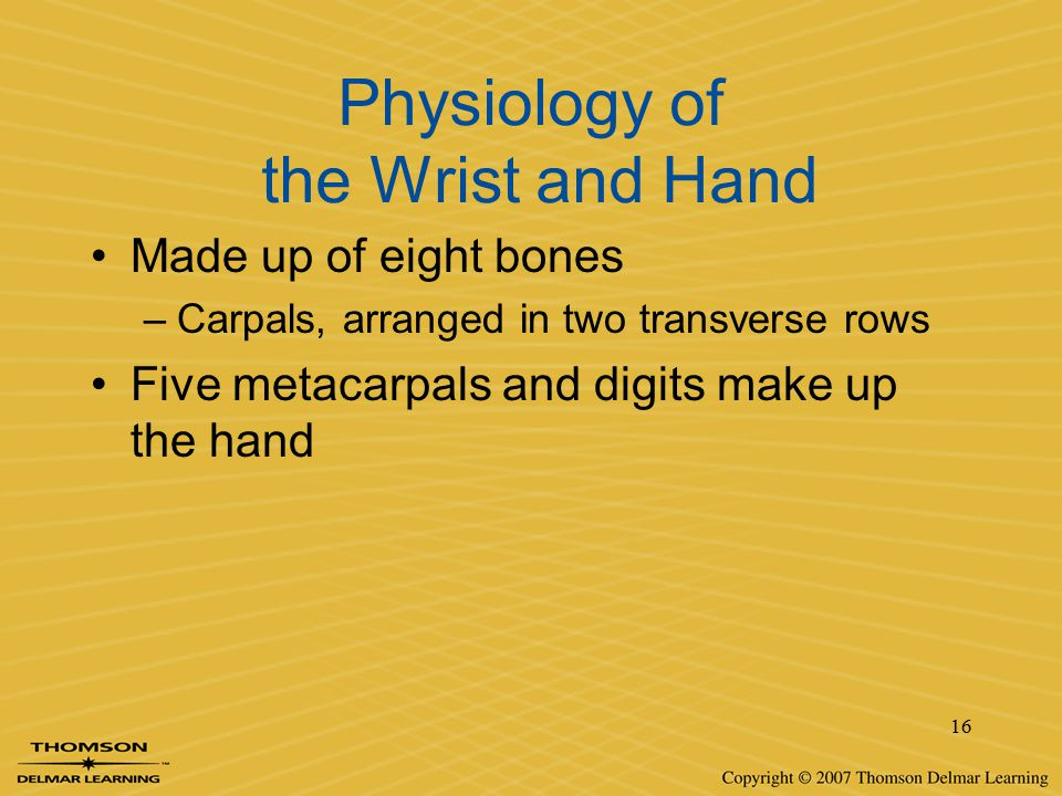 Physiology of the Wrist and Hand