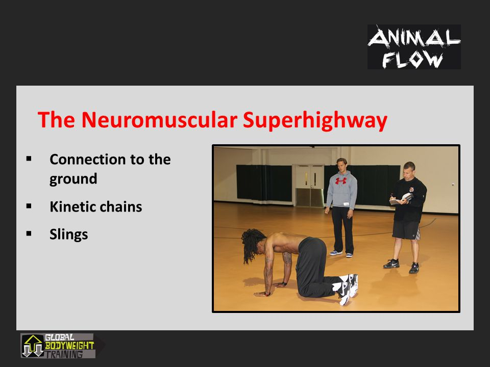 The Neuromuscular Superhighway